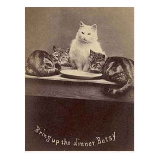 bring_up_the_dinner_betsy_brighton_cats_postcard-r1c5f9b39913c4c06b3b60fc135a375b2_vgbaq_8byvr_540.jpg